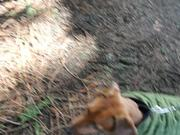 Walking With My Puppy