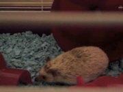 A Tribute To Spike The Hedgehog