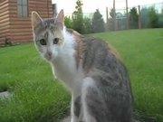 Cute Cat Micina