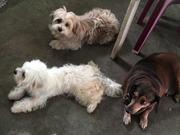 Pet Doggies