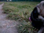 Toyo: Running Through the Meadow
