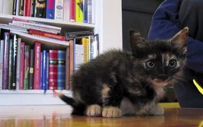 Awesome Kitten Pisi