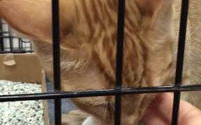 Cat Licking Fingers