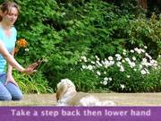 How To Teach A Dog To Stay - Part 2