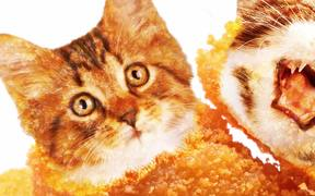 Kitty McNugget
