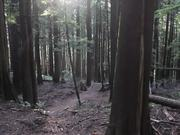 Cole Mooney | Mt Seymour