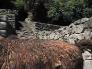 Amazing Machu Picchu, Peru