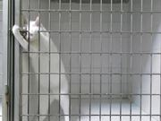 Houdini Cat Opening Locks