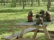 "France 3 ""Les Marmottes"": Rock"
