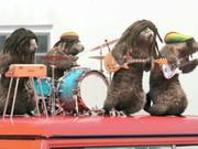 "France 3 ""Les Marmottes"": Reggae"
