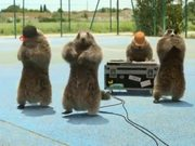 "France 3 ""Les Marmottes"" : Hip Hop"