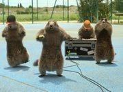 """France 3 """"Les Marmottes"""" : Hip Hop"""