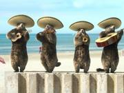 "France 3 ""Les Marmottes"" : Mariachi"