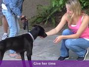 How To Greet A Scared Dog