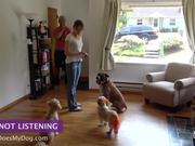 How To Teach A Dog To Stay - Not Listening