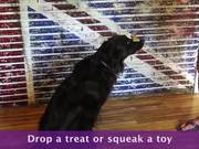 How To Teach A Dog To Stay - Advanced