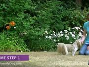 How To Teach A Dog To Come - Part 1