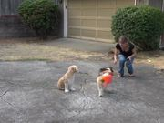 How To Teach A Dog To Come - Part 2