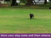 How To Teach A Dog To Come - Part 3
