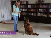 How To Teach A Dog To Lay Down - Step 3