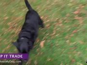 How To Teach A Dog To Drop It - Trade
