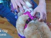Review Dog Essentials- Back Clip Harness