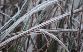 Instants D'Hiver - Winter moments