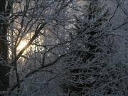 Winter 2 by Elmer Laahne
