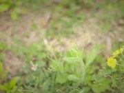 """""""Winter To Spring"""" - Jina Lee"""