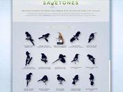 Save Brasil Video: Birds