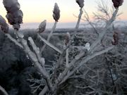 Stable Gimbal Cinema - Winter Ice Storm