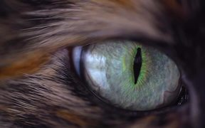 Spellbinding Cat Eye - Extreme Close Up