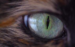 Spellbinding Cat Eye - Extreme Close Up