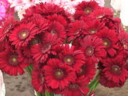 Vibrant Red Flowers