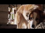 A Dog's Purpose Official Trailer
