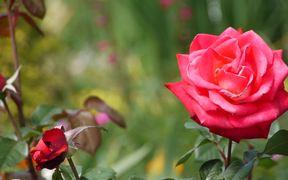 Majestic Flower
