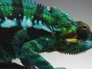 Sony Video: Design