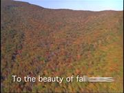Shenandoah- A Place to Experience True Beauty