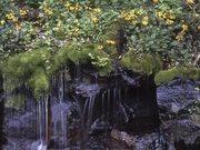 Shenandoah National Park: Spring in Shenandoah