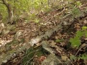 Shenandoah National Park: Shenandoah Salamander