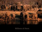 Elephants Forever - Call To Action