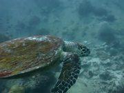 Koh Tao, Thailand. Underwater Best Of August 2013