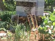Bee Swarm Moving
