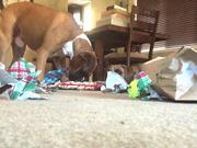A Boxer Christmas