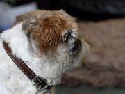 Canon 7D Test - Harvey Dog