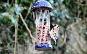 Bird's Feeding