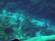 Karpata Reef - Bonaire