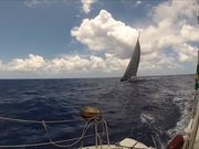Tulip - 88th Sail Yacth