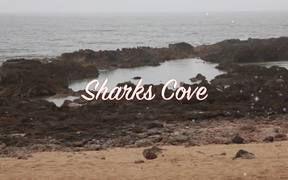 Shark's Cove: Discovering the Volcanic Island