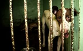 Helping Animals - Helping People.